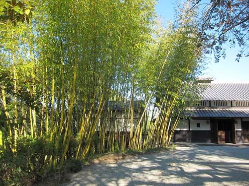 Hakone Japanese Gardens, Saratoga, CA, bamboo IMG_2299