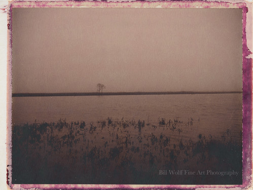 trees water fog landscape polaroid january delaware polaroid250 2013 polaroidchocolate impossibleproject