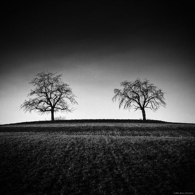 Too Trees