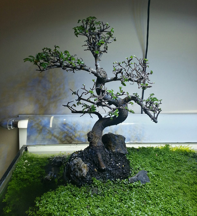 Aquario_Bonsai20121202_210719_2