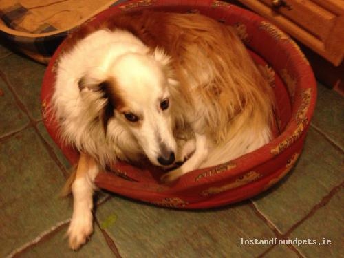[Reunited] Tue, Jan 22nd, 2013 Lost Male Dog - Clarina, Breska Beg, Limerick