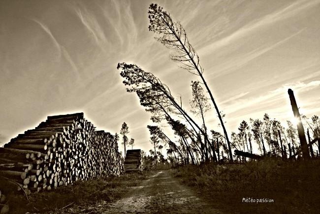 débardage du bois abattu par Klaus dans les Landes météopassion