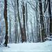 Secret Woodland by Olivia L'Estrange-Bell