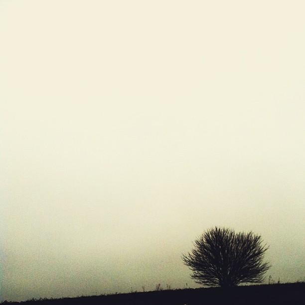 Midwest landscape #WHPfoggy #landscape #fog #iowa #weekending