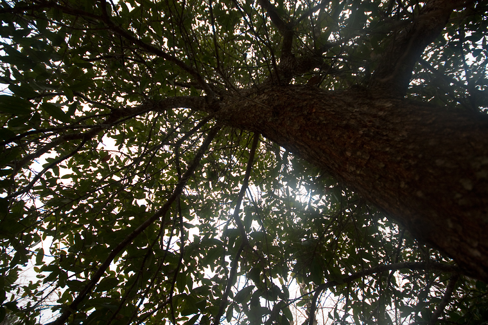 29/365 - Under the Oak