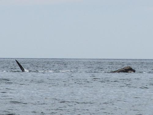Puerto Madryn: une tête de baleine