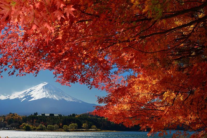 河口湖の紅葉2012