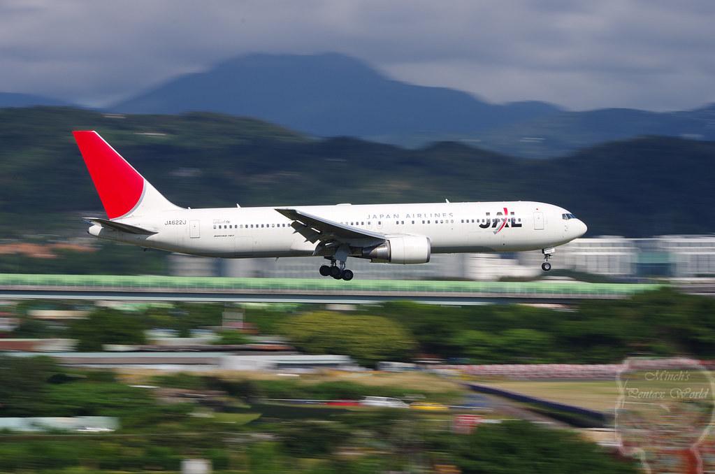 松山機場打鐵鳥之打到日本大熊貓
