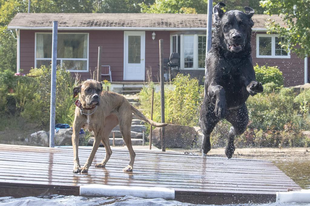 Nice Jump Bro
