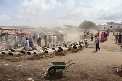 Camel Market (22)