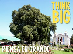 All Travel is Local: Think Big = Piensa en Grande