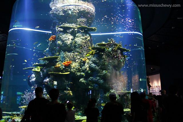 RWS S.E.A Aquarium 495