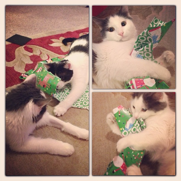 Every cat I've ever know loves wrapping paper. #christmas #presents #catstagram #catsofinstagram