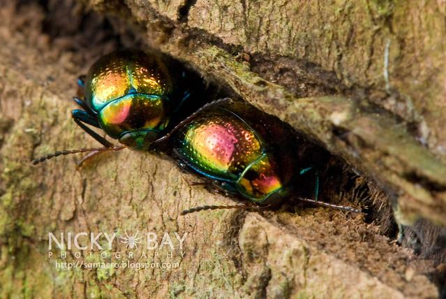 Beetles - DSC_8990