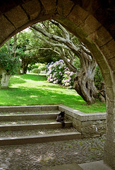 St Michael's Mount Gardens, Cornwall, England (2 of 19) | View of gnarled tree through arch near garden entrance