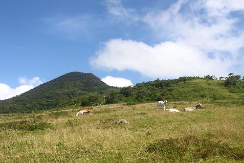 Mt. Malindig