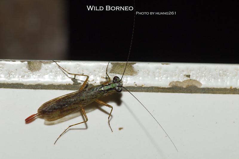 Wild Borneo 野性婆羅洲-節肢動物