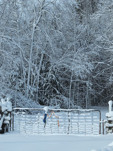 gate to a snowy woods