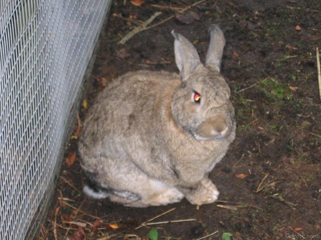 Really evil bunny
