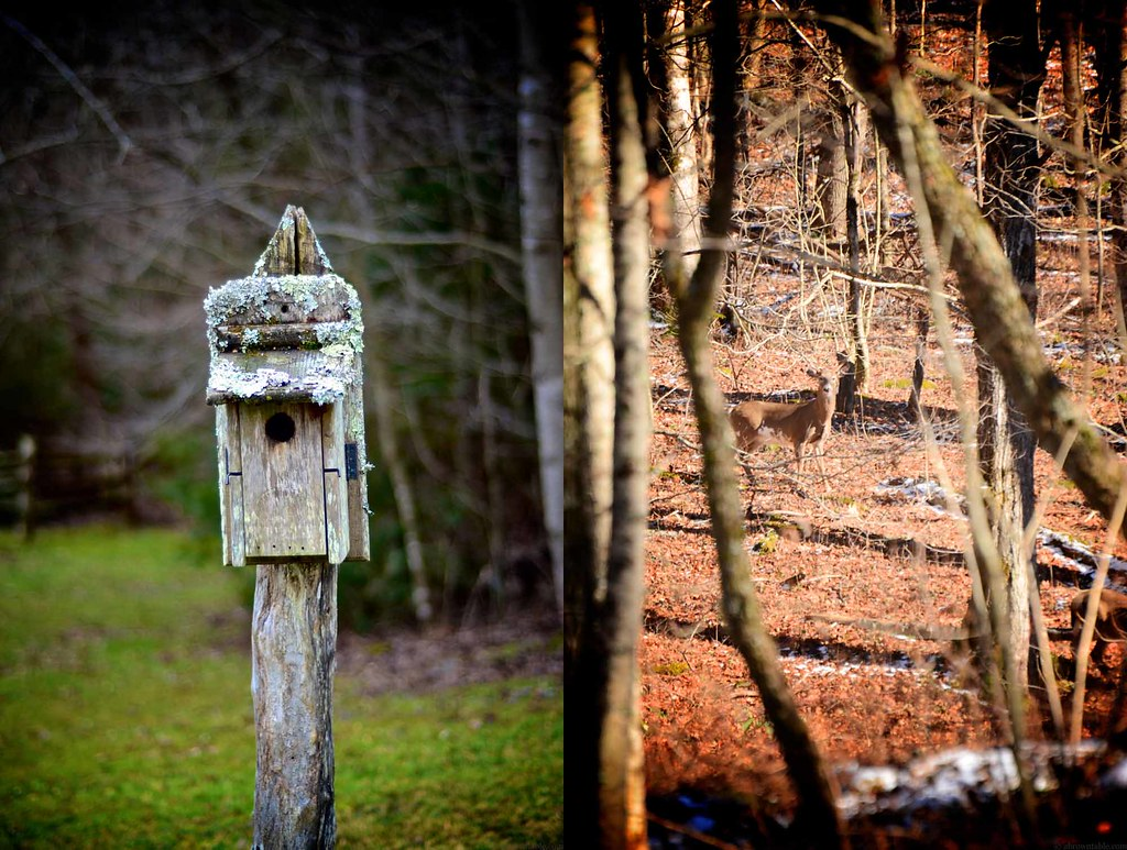 A Bird House and Wild Deer