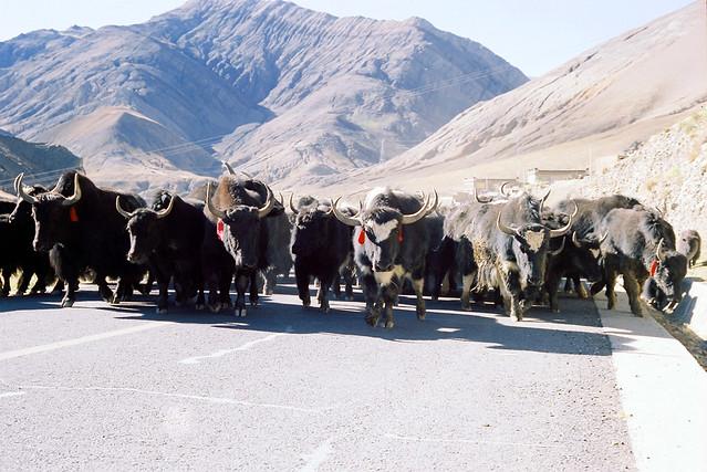 沖吧!2013.攝於 林芝•西藏