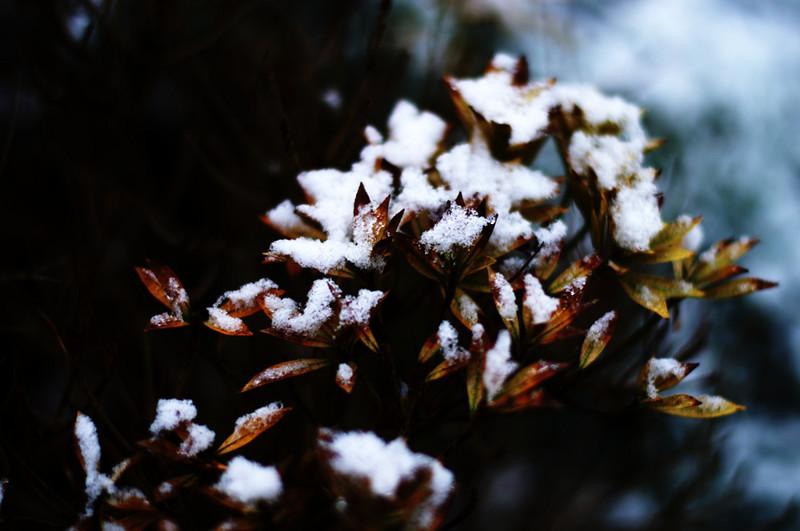 snowfall, again