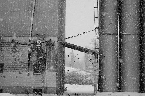 light blackandwhite snow canada birds brooklyn landscape photo flickr novascotia noiretblanc snowstorm explore newport windsor canondslr digitalimage hantscounty feedmill contemporarylandscape sociallandscape rockdoves topf25faves canoneos60d avardwoolaverphoto shoteatshot jan112013 startcafe2o13