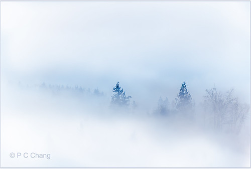 winter cloud mist mountain tree nature fog forest sunrise garden season landscape woods evergreen valley cascade cloudscape raincloud cascademountains duglasfir pcchang rememberthatmomentlevel1 rememberthatmomentlevel2 dougfirforest photographyforrecreationclassic