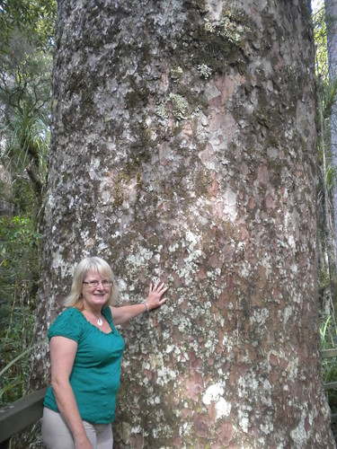 Puketi Kauri Forest