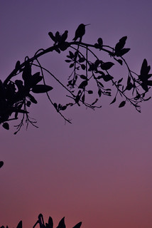 Hummingbird at Dusk