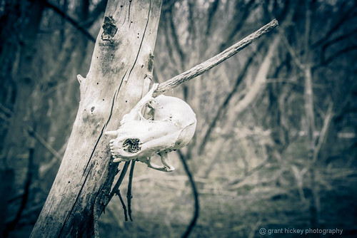 Found Skull by gashphoto