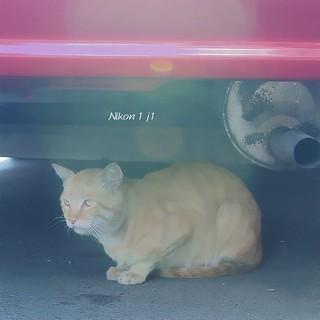 貓先生,遇見路邊小花貓