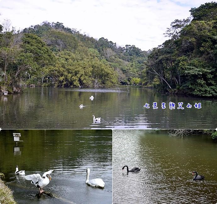 5 天鵝湖