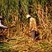 Agriculture in Fiji