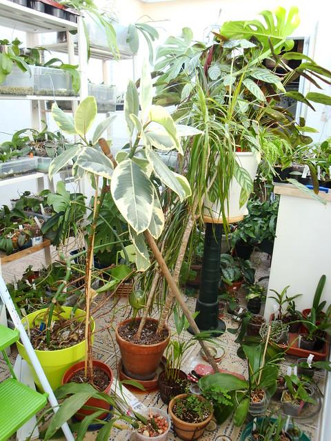 Dans mon Jardin d'Hiver 8429394693_c42a0c0d81_z