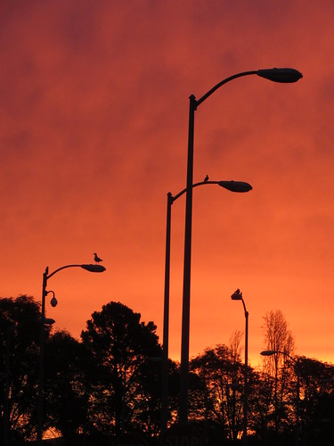 Orange Sky and Industrial Lights