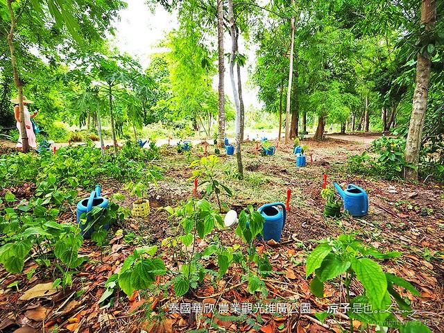 泰國華欣 農業觀光推廣公園 25