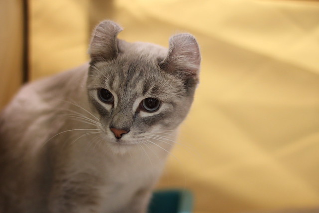 Some pics from the international cat show in Lapua