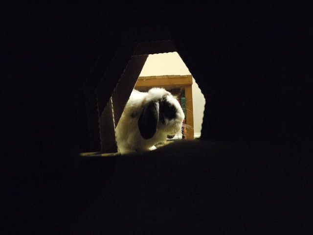looking through the tunnel at betsy