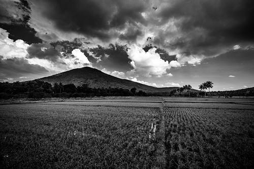 philippines calauan calabarzon lagunamtkalusungan