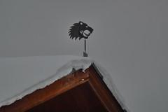 Wind vane [P1120393]