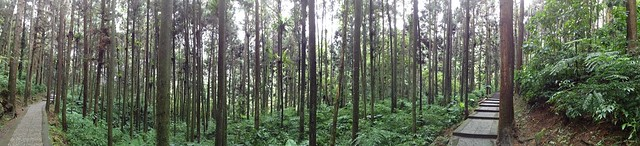 溪頭國家森林公園