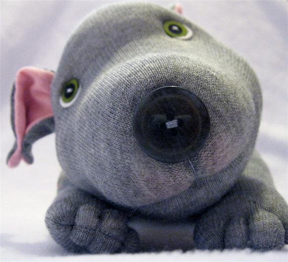 sockdog
