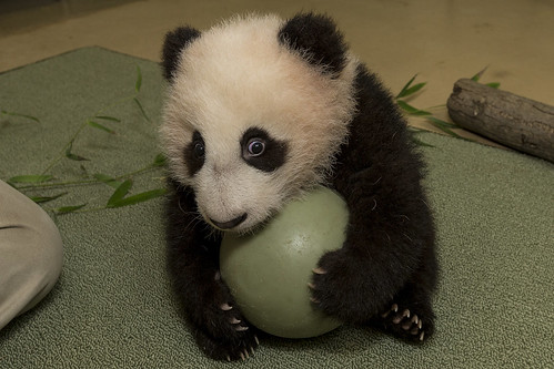Xiao Liwu has a ball