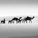 .. by Abdulrahman AL-Dukhaini || عبدالرحمن