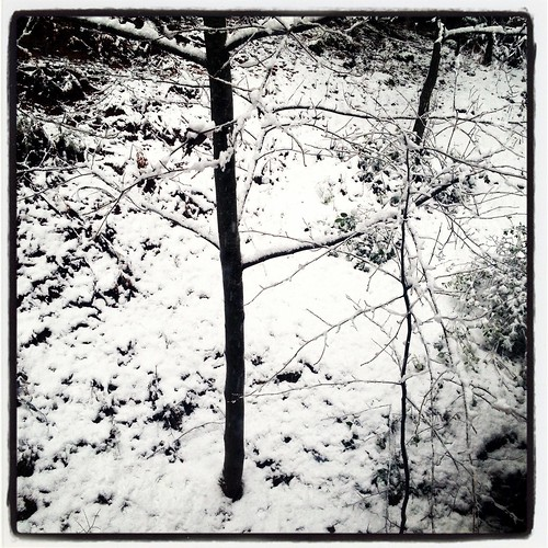 snowday by Nature Morte