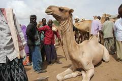 Camel Market (7)