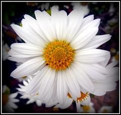Last Fall Day but We Still Bloom
