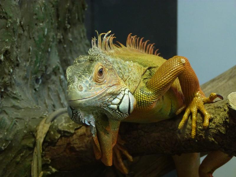 Muséum d'Histoire naturelle (Tours), 23.12.2012.
