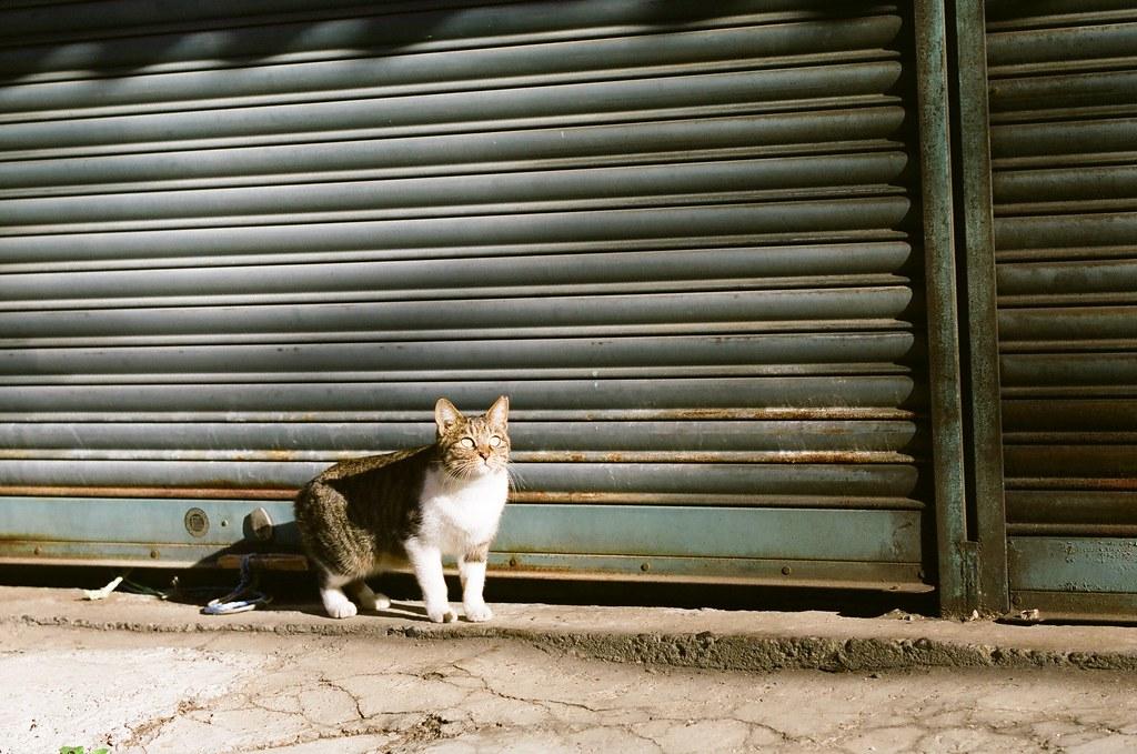 シャッター前の猫